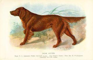 Antique Chromolithograph Print 1889 Named Irish Setter Dog