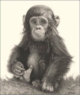 Wildlife Art Signed Print Pencil Drawing Sketch Ape Monkey Baby Chimp