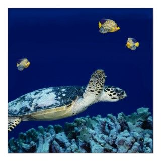 Photo shows a sea turtle swimming above coral with deep blue
