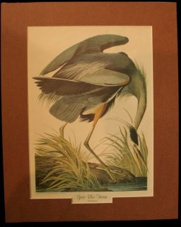 Custom Matted John James Audubon Great Blue Heron Print Birds of America Series