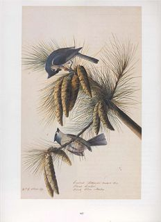 John James Audubon Bird Print Tufted Titmouse