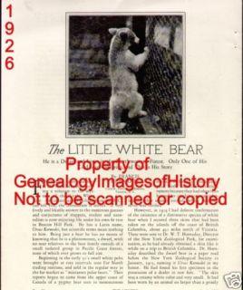 Ursus Kermodei Pygmy White Polar Bear 1926
