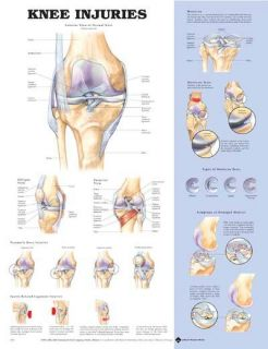 Anatomy Chart Poster Laminated Massage Therapy Supplies