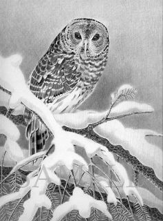 Barred Owl/owl/birds/art/drawing/pencil art/black & white/print