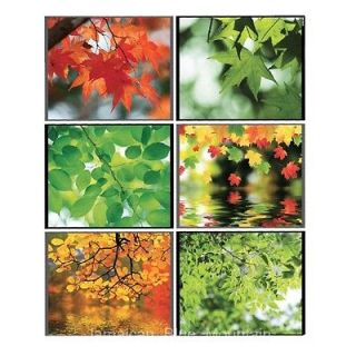 Autumn Forest Leaves PVC Wall Kitchen Cabinet Glass Doors Sticker