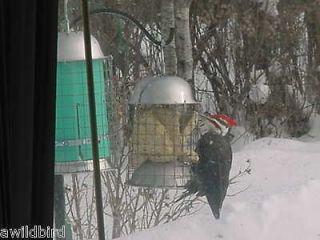 STAINLESS STEEL SQUIRREL PROOF WILD BIRD SUET FEEDER