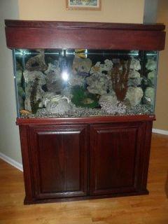 55 gallon fish tank top fin 55 gallon starter kit for 55 gallon fish tank petsmart