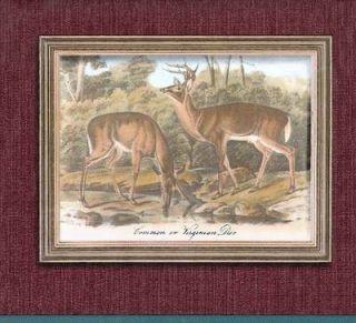 Prints of Deer   Partridge   Rabbits Sale$9.95 Wallpaper Border 130
